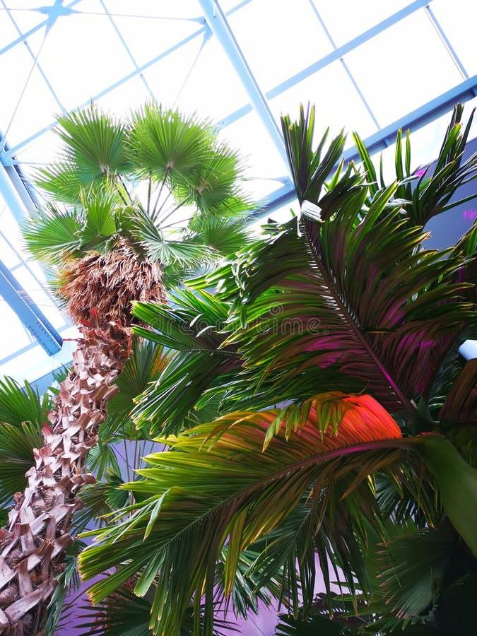 Tropikalni drzewka palmowe - dolny widok zdjęcia stock