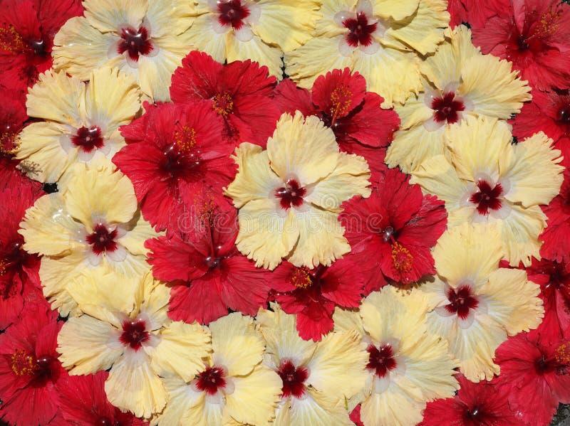 tropikalni egzotyczni kwiaty obraz royalty free