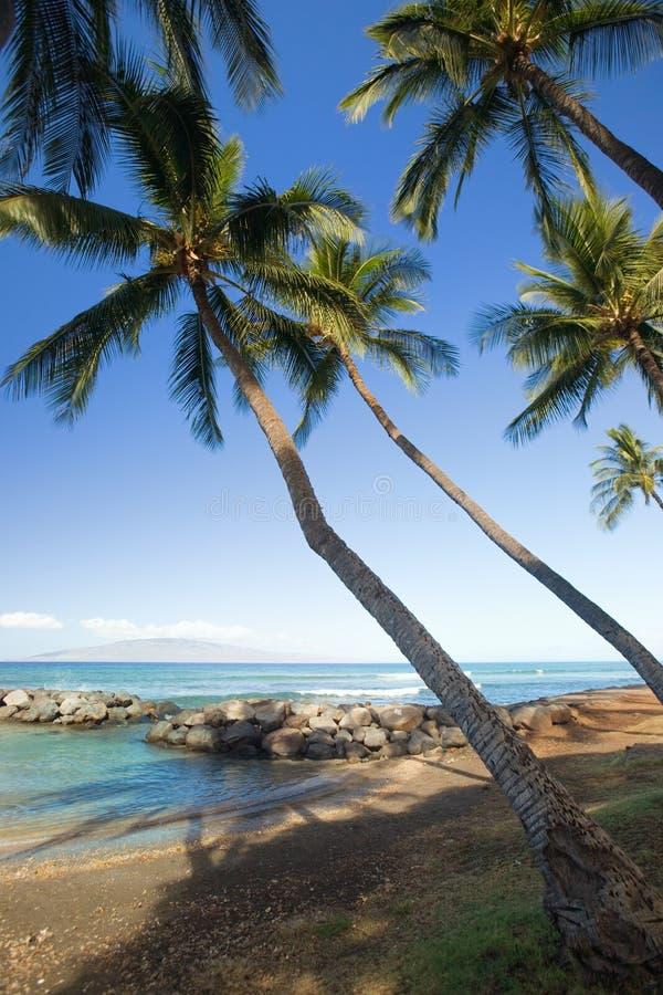 Tropikalni lagun drzewka palmowe