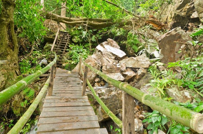 Tropikalni las tropikalny zdjęcia royalty free