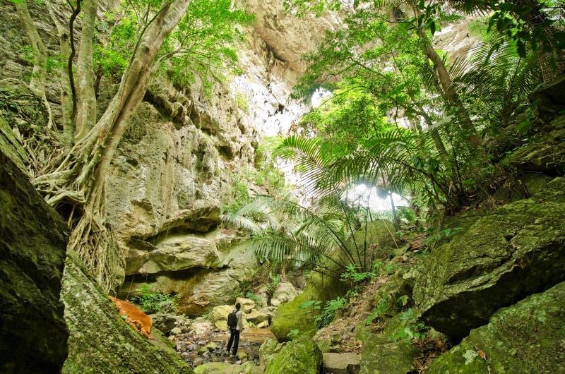 Tropikalni las tropikalny obraz stock