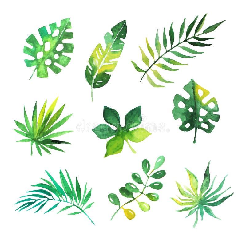 Tropikalni liście ustawiają, dżungli drzewa, botaniczne akwarela wektoru ilustracje ilustracja wektor