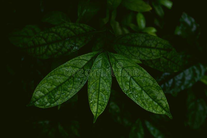 Tropikalni liście w dżungli, ciemnego i markotnego strzale, obrazy royalty free
