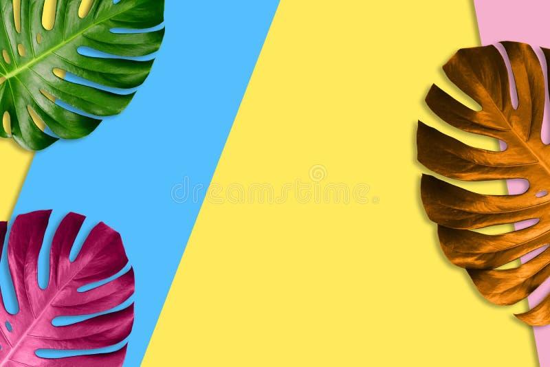 Tropikalni palma liście na jaskrawym kolorowym tle egzotyczne ro?liny poj?cia t?a ramy piasek seashells lato Jaskrawy, modny styl fotografia royalty free