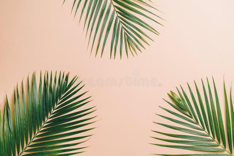 Tropikalni palma liście z kopii przestrzenią fotografia stock
