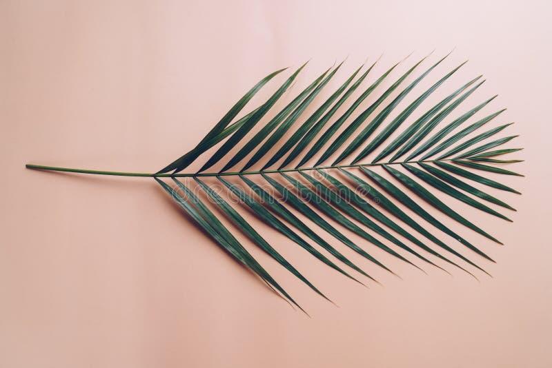 Tropikalni palma liście z kopii przestrzenią obraz stock