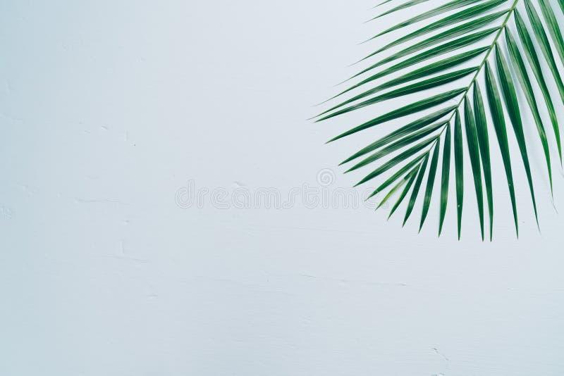 Tropikalni palma liście z kopii przestrzenią zdjęcia royalty free