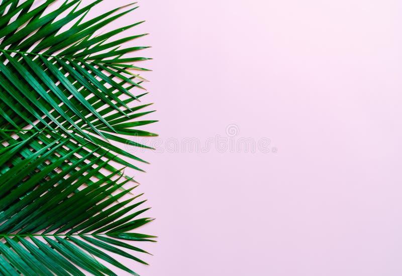 Tropikalni palma liście z kopii przestrzenią obraz royalty free