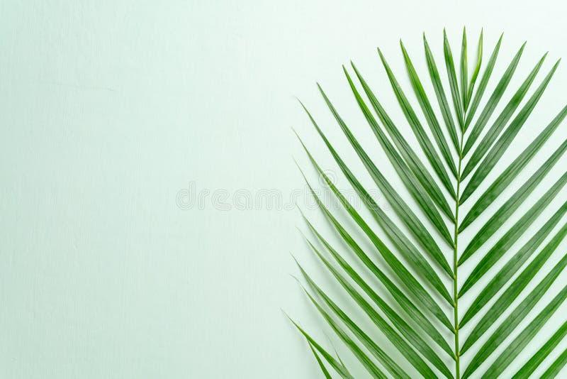 Tropikalni palma liście z kopii przestrzenią zdjęcie royalty free