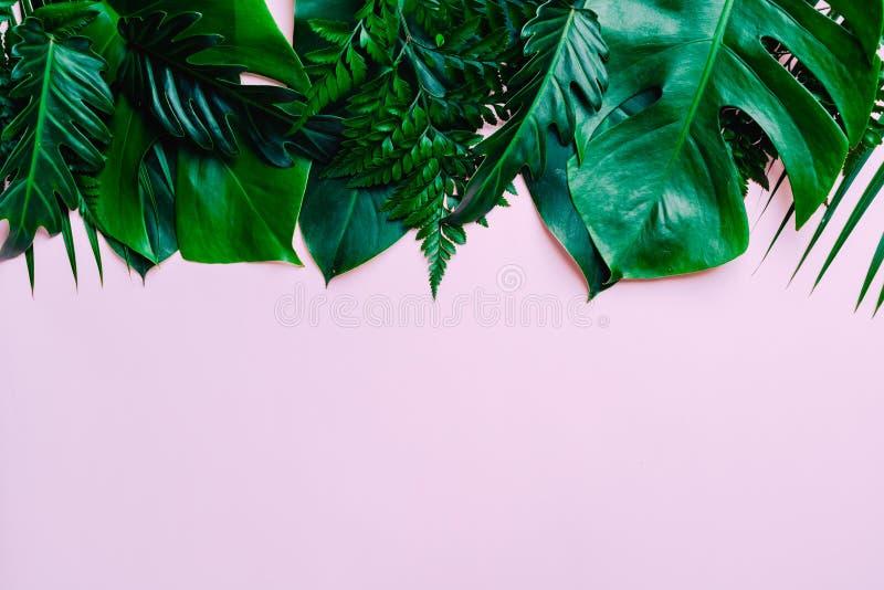 Tropikalni palma liście z kopii przestrzenią zdjęcia stock