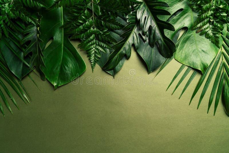 Tropikalni palma liście z kopii przestrzenią fotografia royalty free