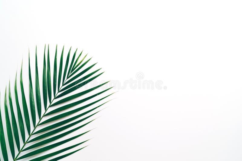 Tropikalni palma liście z kopii przestrzenią zdjęcie stock