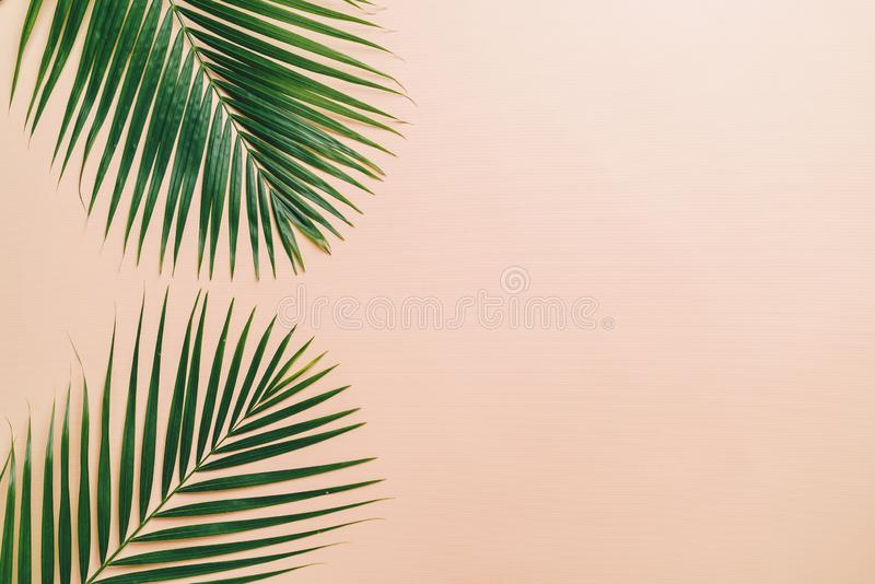 Tropikalni palma liście z kopii przestrzenią obrazy royalty free