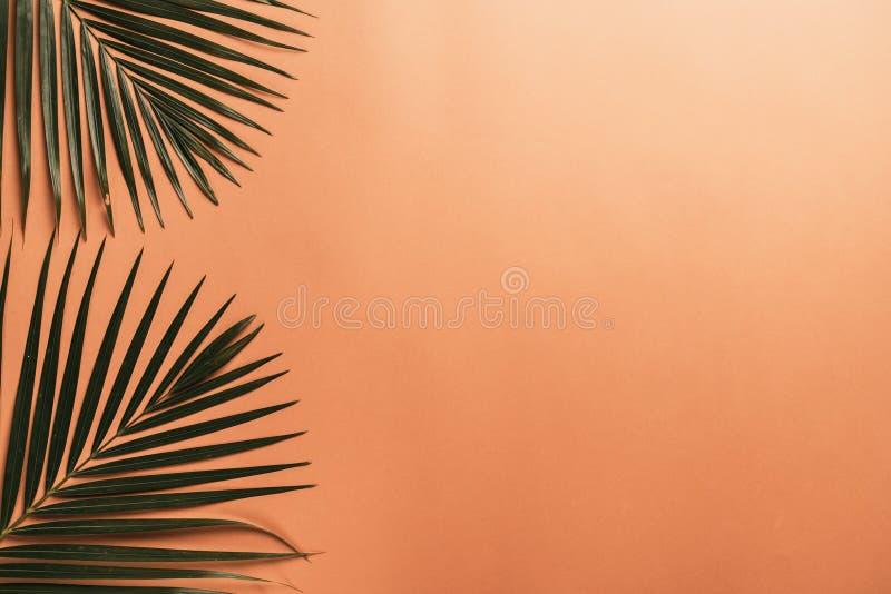 Tropikalni palma liście z kopii przestrzenią obrazy stock