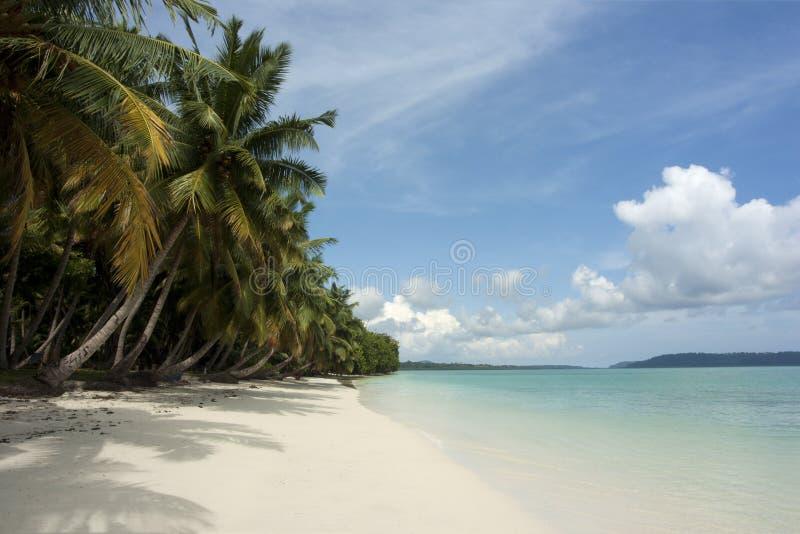 tropikalni plażowi drzewka palmowe fotografia stock