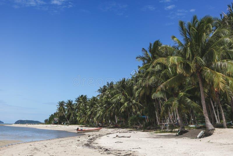 tropikalni plażowi piękni drzewka palmowe obrazy royalty free