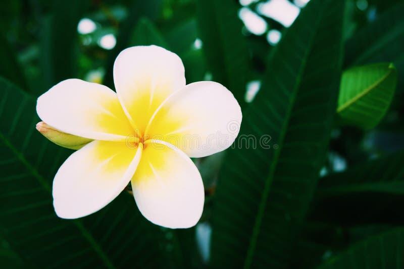 Tropikalny żółty kwiat obraz stock