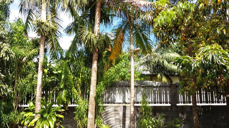 tropikalny fotografia stock