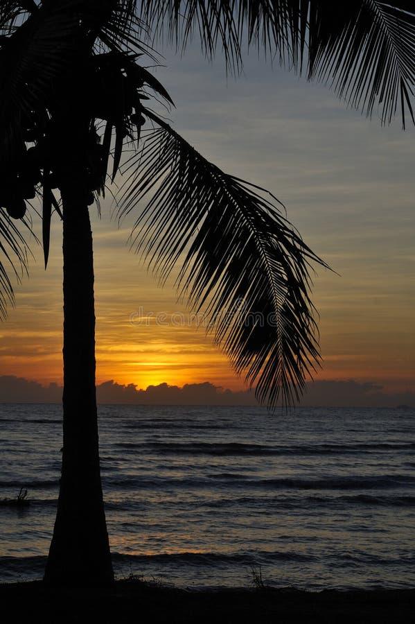 Download Tropikalny Australia Zmierzch Zdjęcie Stock - Obraz złożonej z drzewo, zmierzch: 13326448