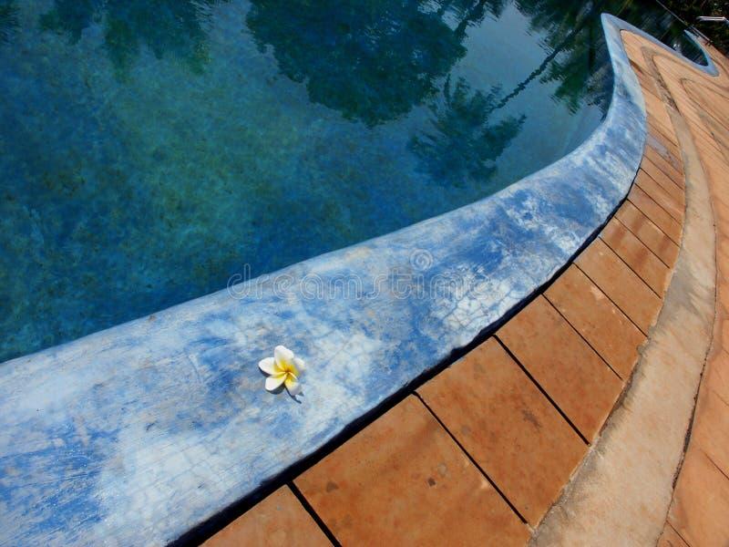 tropikalny basenu zdjęcie royalty free