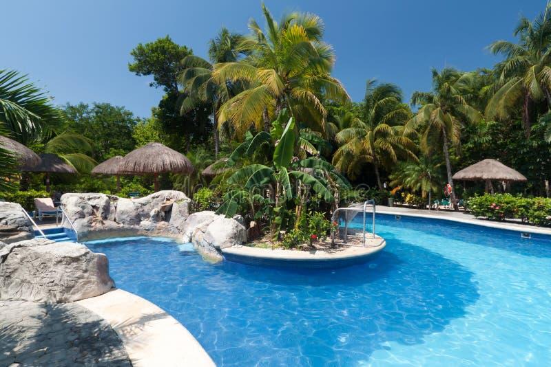 tropikalny basenu dopłynięcie zdjęcie stock