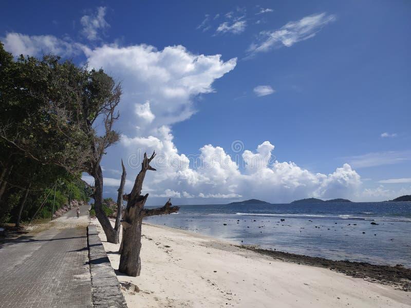 Tropikalny brzeg z nieżywymi drzewami i gigantem chmurnieje przy Ladigue Seychelles zdjęcia stock