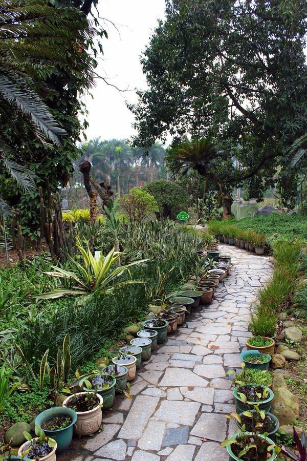 Tropikalny Ciemniutki ogród botaniczny przy ludźmi ` s parka w Nanning, Chiny obrazy stock