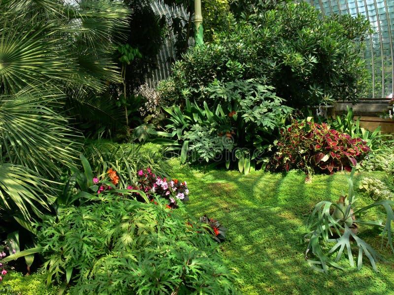 tropikalny cieplarniany. zdjęcie stock