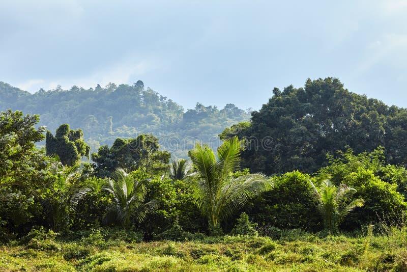 Tropikalny dżungla krajobraz pod słońcem obrazy royalty free