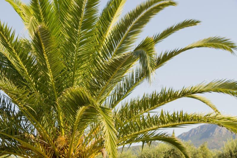 Tropikalny drzewka palmowego i niebieskiego nieba tło obrazy stock