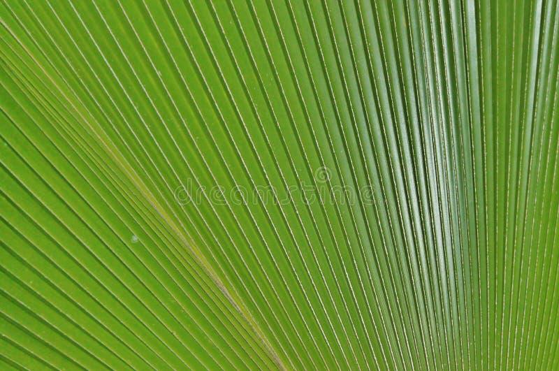 Tropikalny drzewka palmowego zakończenie w górę przestrzeni obrazy royalty free
