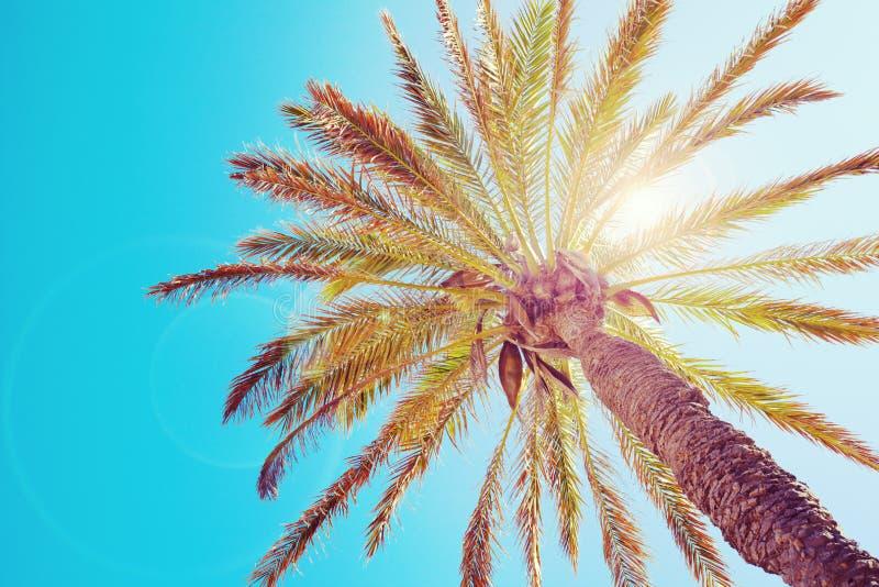 Tropikalny drzewko palmowe fotografia stock