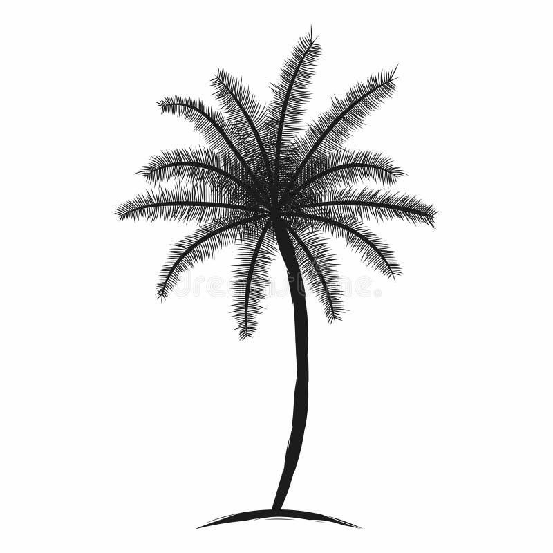 Tropikalny drzewko palmowe z liśćmi Czarnej sylwetki odosobniony drzewko palmowe na białym tle ilustracji
