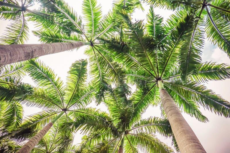 tropikalny drzewko palmowe z słońca światłem na nieba tle Lato natury podróży pojęcie Rocznika brzmienie zdjęcie royalty free