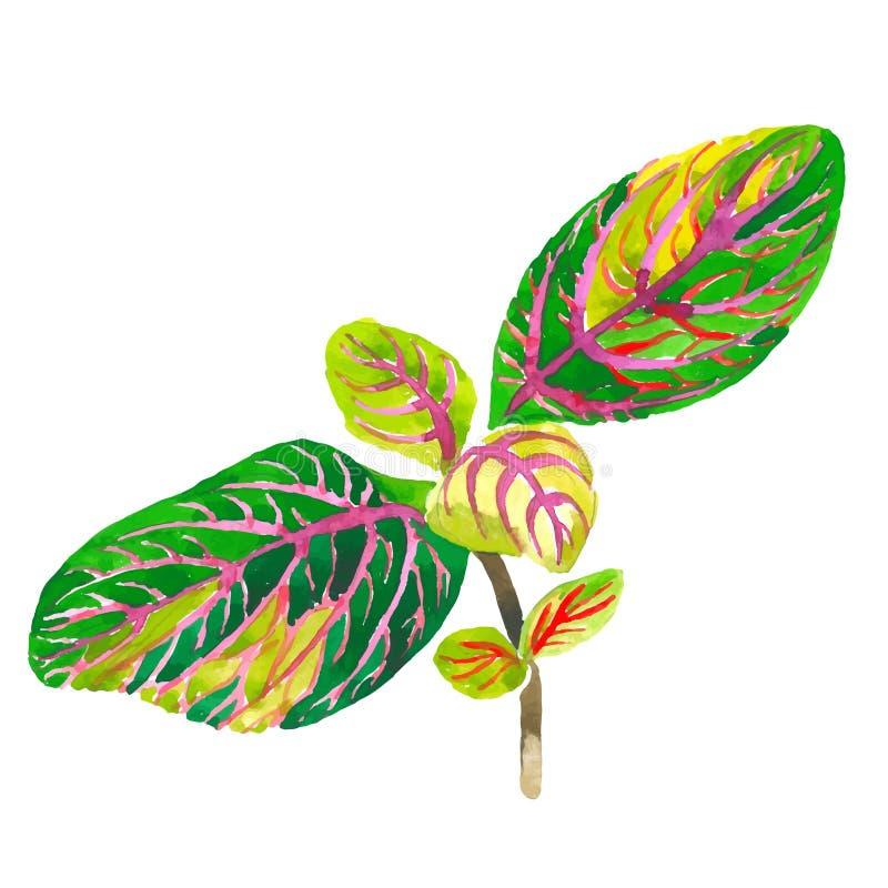 Tropikalny Hawaje liści drzewko palmowe w wektoru stylu odizolowywającym ilustracja wektor