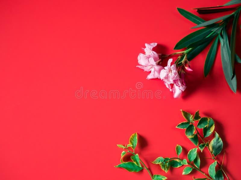 Tropikalny i lato flatlay minimalny pojęcie od menchii kwitnie dowcip fotografia stock