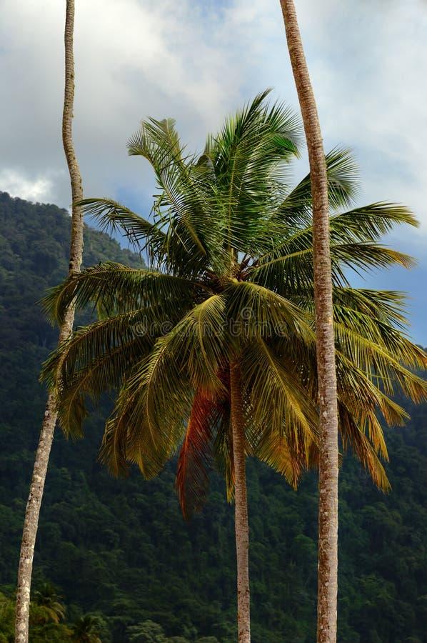 Tropikalny klimat i drzewka palmowe obraz royalty free