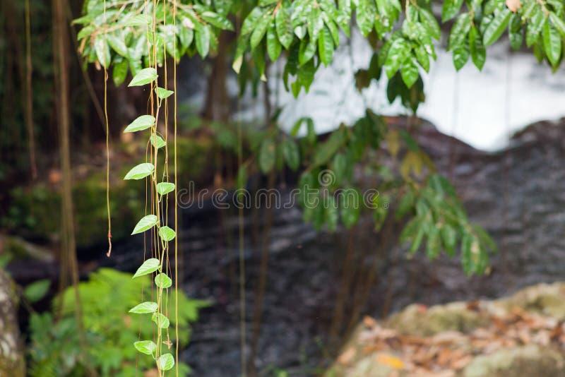 Tropikalny klimat w Bali wyspie fotografia royalty free