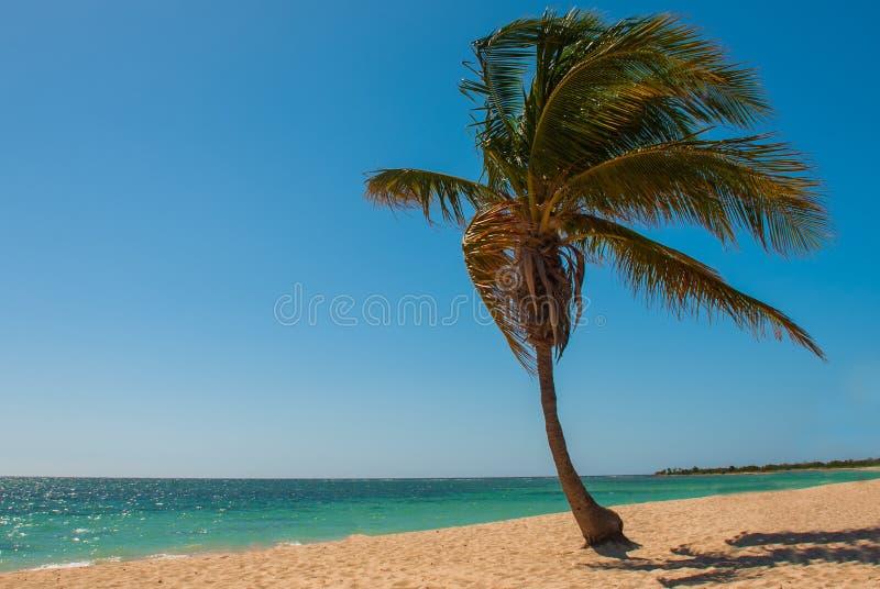 Tropikalny kokosowy drzewko palmowe na plaży z żółtym piaskiem Morze Karaibskie z turkusem i błękitne wody Kuba trinidad Ancona B zdjęcie stock
