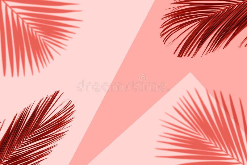 Tropikalny koralowy koloru tło z egzotyczną tropikalną palmą opuszcza Minimalny lata pojęcie royalty ilustracja