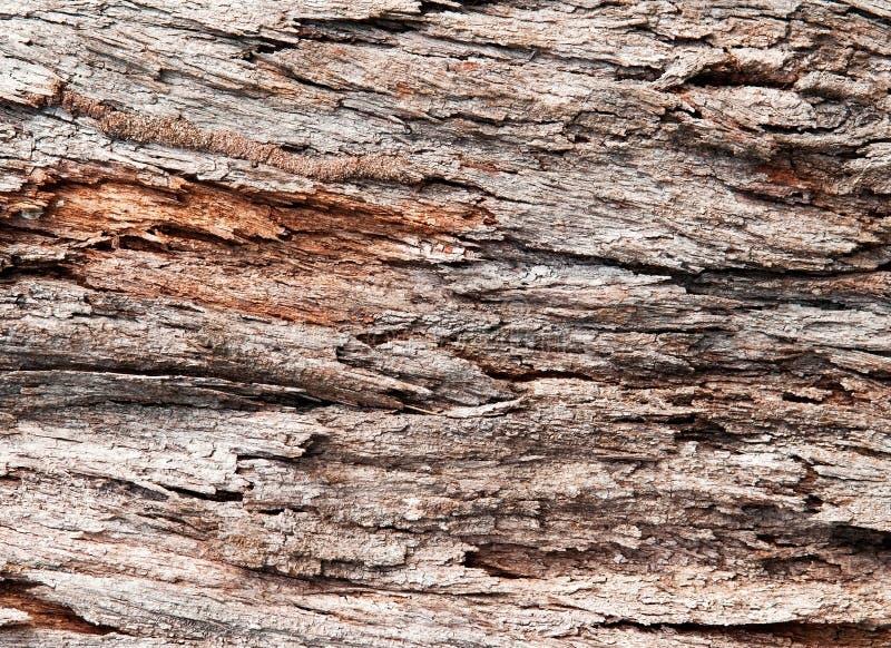 tropikalny korowaty drzewo fotografia stock
