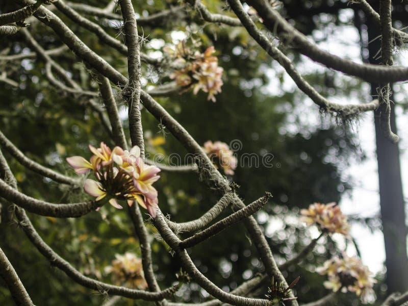 tropikalny kwiat fotografia stock
