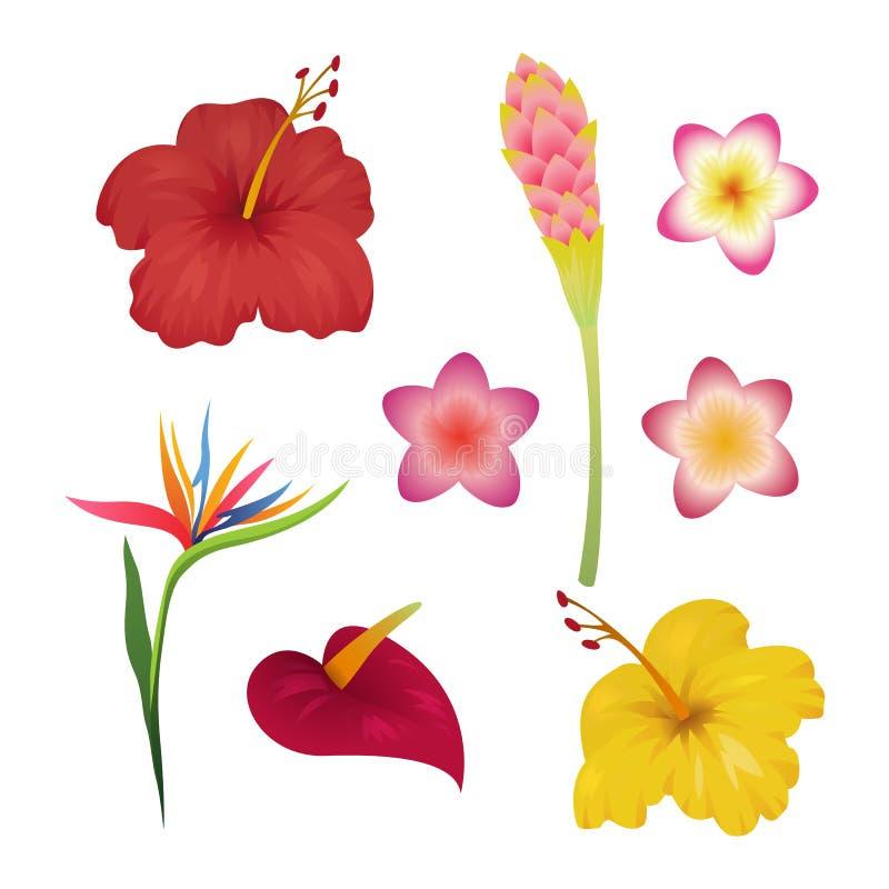 Tropikalny kwiatu set Zwrotników kwiatów mody druk Hawaje polynesian Bali Indonesia rośliny ogródu karaibski tło royalty ilustracja