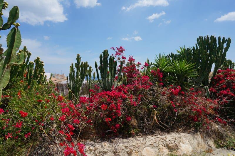 Tropikalny kwiecenie ogród z kaktusem, palmami i czerwienią, kwitnie krzaka obraz stock