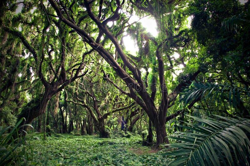 Tropikalny las zdjęcie stock
