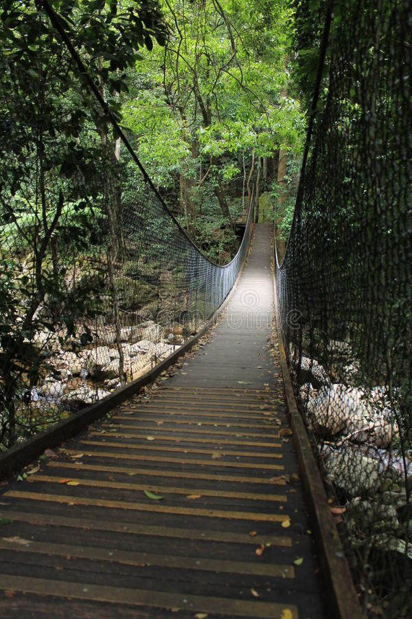 Tropikalny las deszczowy ścieżka zdjęcie royalty free