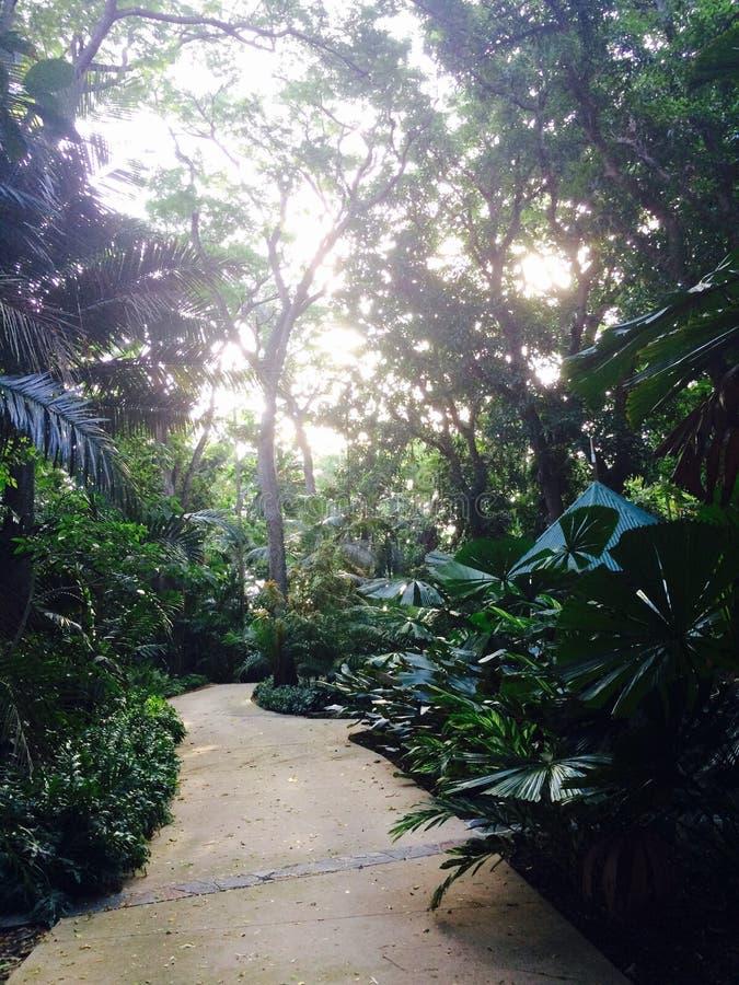 Tropikalny las deszczowy ścieżka zdjęcia stock
