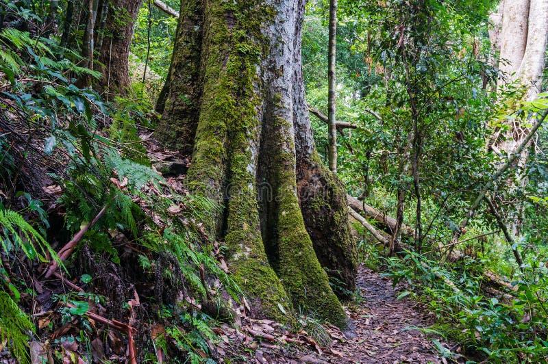 Tropikalny las deszczowy ścieżka Wycieczkować w tropikalnym lesie tropikalnym obraz royalty free