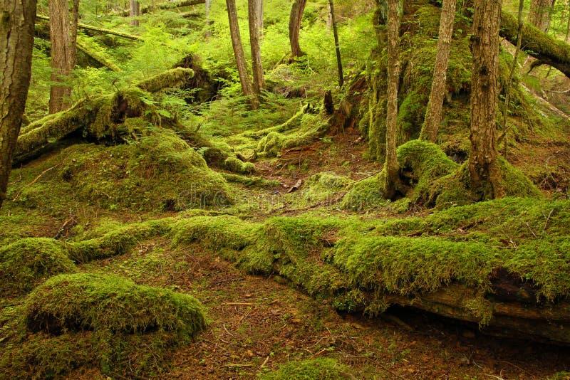 tropikalny las deszczowy zdjęcia royalty free
