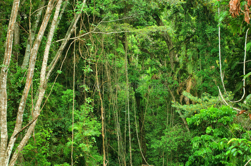 Tropikalny las deszczowy obraz stock